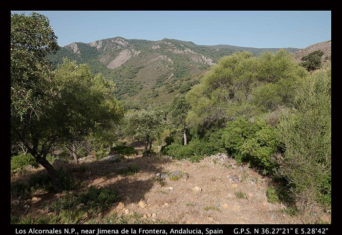 Los Alcornales N P 8_0958-1 700