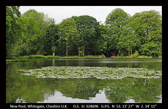 New Pool, Whitegate, Cheshire D