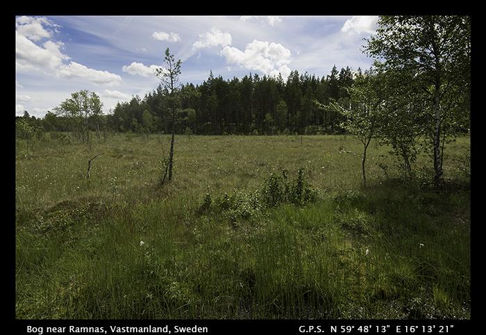 Bog near Ramnas, Vastmanland, Sweden WP 8-4535