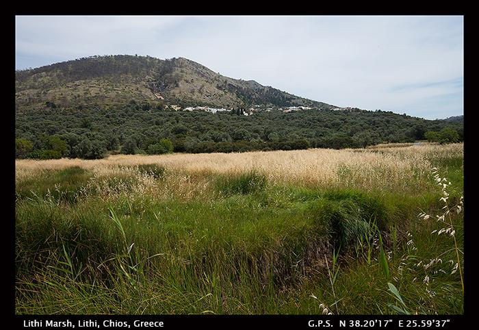 Lithi Marsh 8-1449 WP