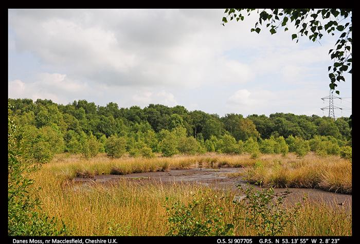 Danes Moss, Cheshire U.K A.