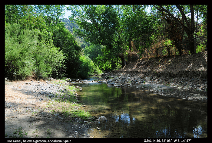 Rio Genal, below Algatocin, Andalucia D 5668