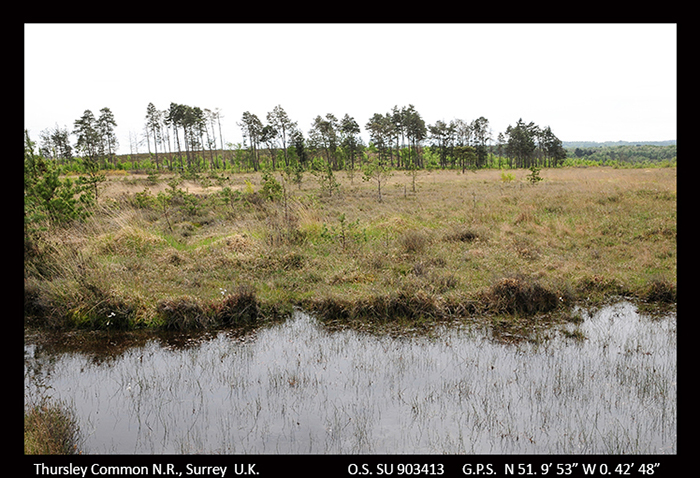 Thursley Common, Surrey_3616-1 700
