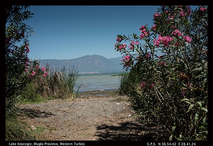 Lake Koycegiz, Mugla province, Western Turkey 8-0211 700
