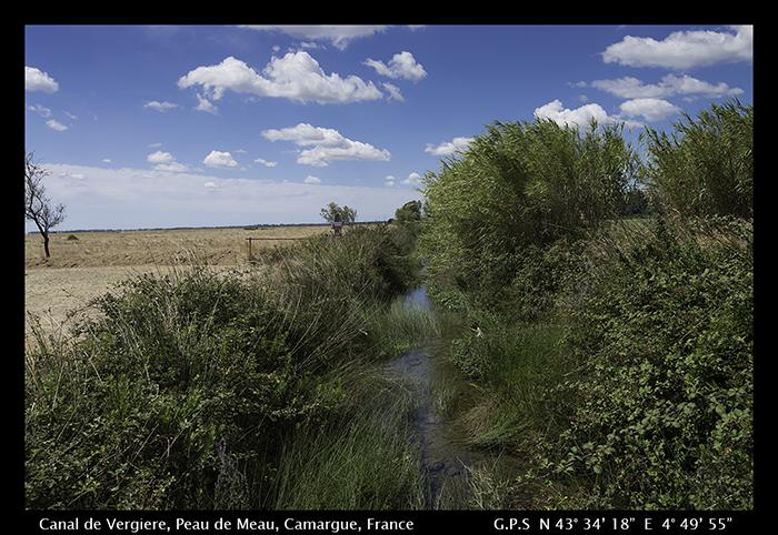 Canal de Vergiere, Peau de Meau, Camargue, Framce 8-4800